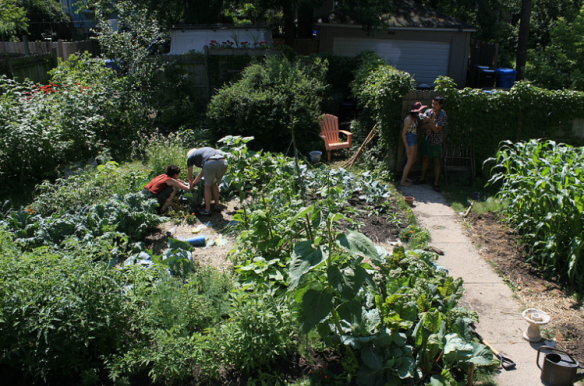 A scene from one of our Thursday morning harvests during the Summer of Solutions program.