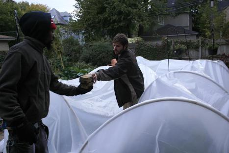 Marlon English (blog author, left) and Peter Hoy work together to protect plants from the frost in early November
