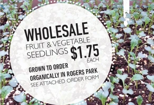 wholesale-seedlings-flier